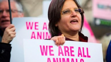 anita-krajnc-water-pigs